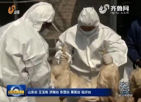 山东全力防控H7N9流感病 日照莱芜均未出现新发病例