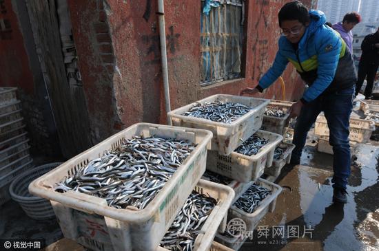 """山东青岛:面条鱼进入旺季 每斤卖出""""白菜价"""""""