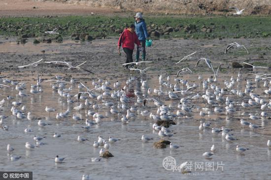 青岛:红嘴鸥进入迁徙季 游客投食相送