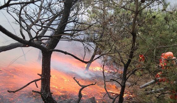 清明烟台突发森林火情 出动直升机扑救