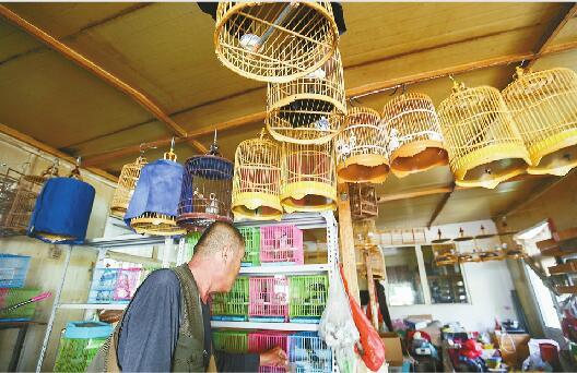 济南一下岗工人以卖鸟为生 50多只鸟深夜被盗损失上万元