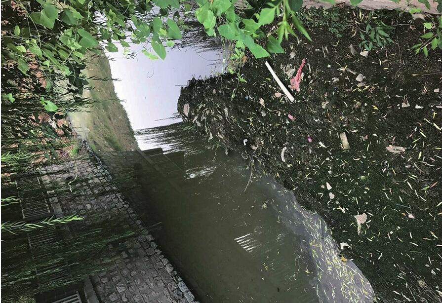 济南:生活污水侵袭小区河道 河水恶臭弥漫盛福花园