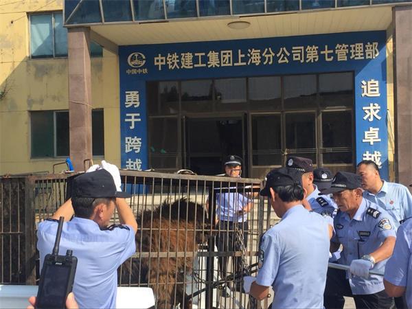 """济南法院首次跨区协同执行:老赖养藏獒""""护院"""""""