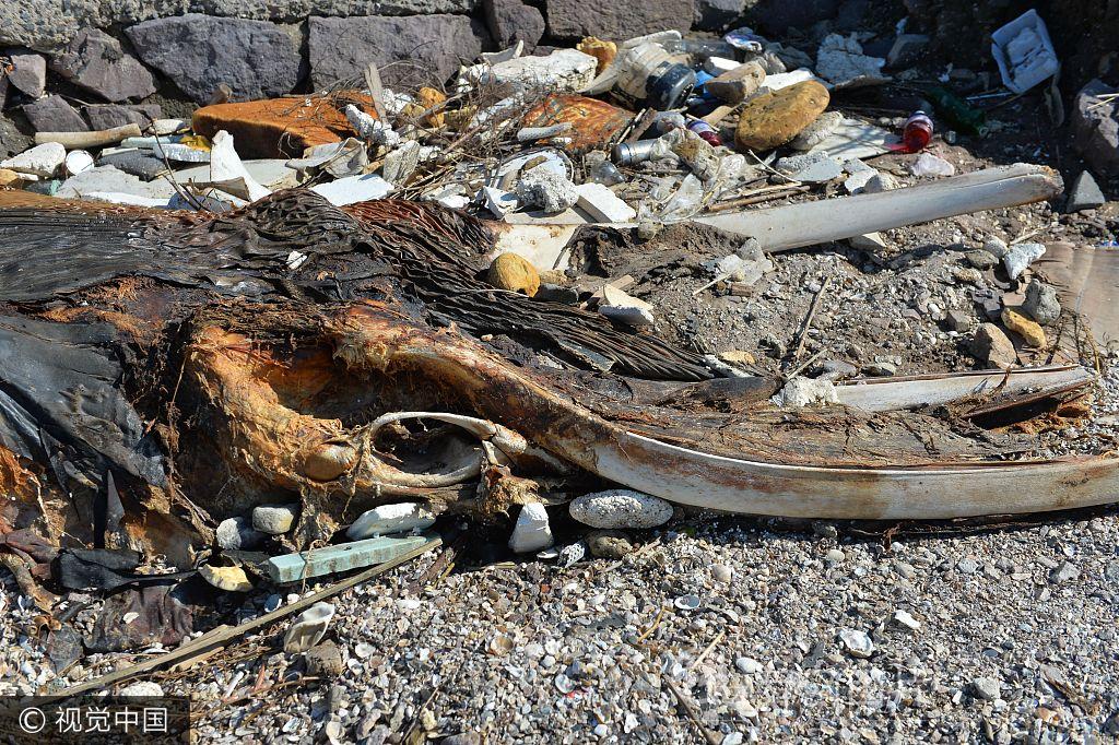青岛一海滩现海洋生物遗骸 头骨巨大疑似鲸鱼