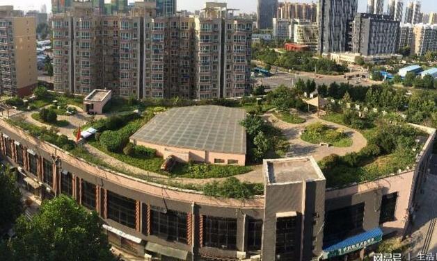 到底能不能种? 济南居民在单元楼顶种花草被物业铲除