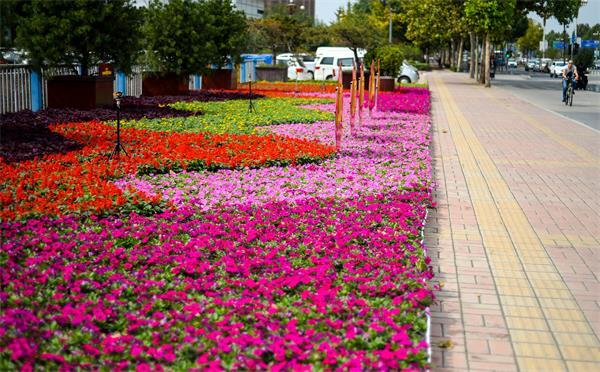 济南60多万盆鲜花扮靓泉城