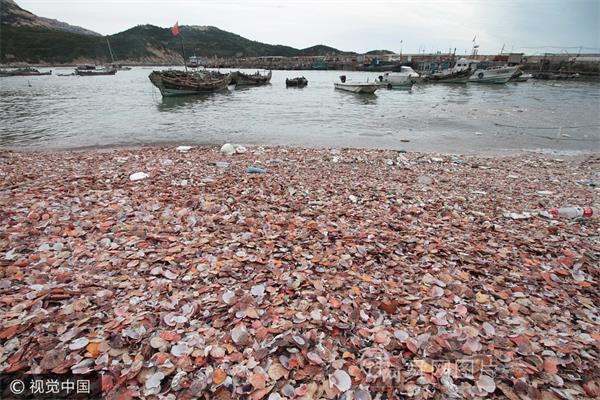 探秘青岛贝壳海滩 深藏崂山渔村之中