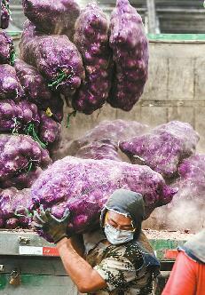 济南:蔬菜专职搬运工 装卸一吨赚12元