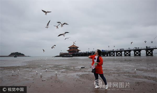首批越冬红嘴鸥抵达青岛栈桥