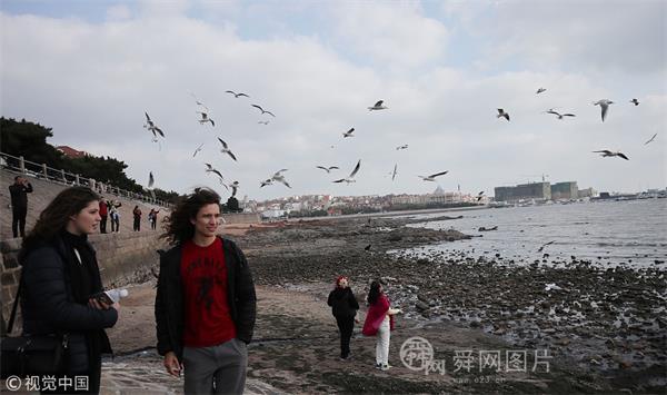 青岛:海鸥栈桥景区舞翩跹