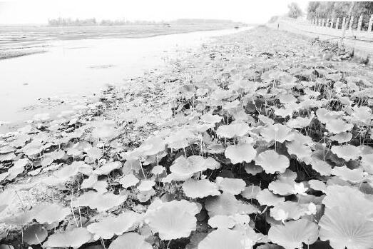 山东河湖规范划界落实河长制 2020年底前全面完成验收