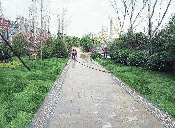 创城:泉城处处绿意盎然 生态文明自然而然