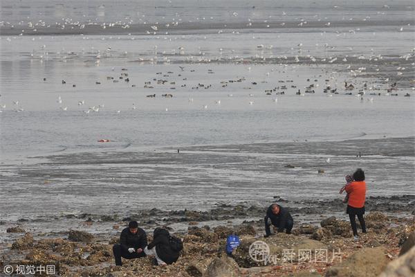青岛:万鸟翔集胶州湾河口觅食撒欢