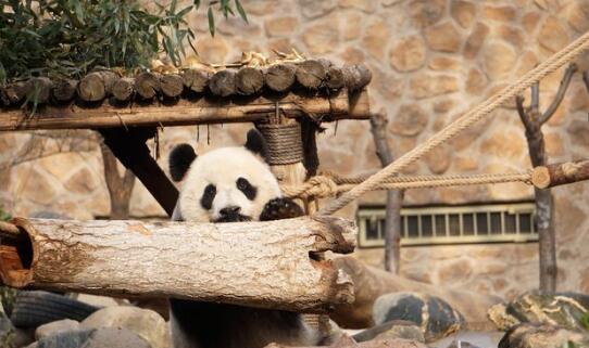 济南动物园喜迎新年 游客参与为动物们制作新家