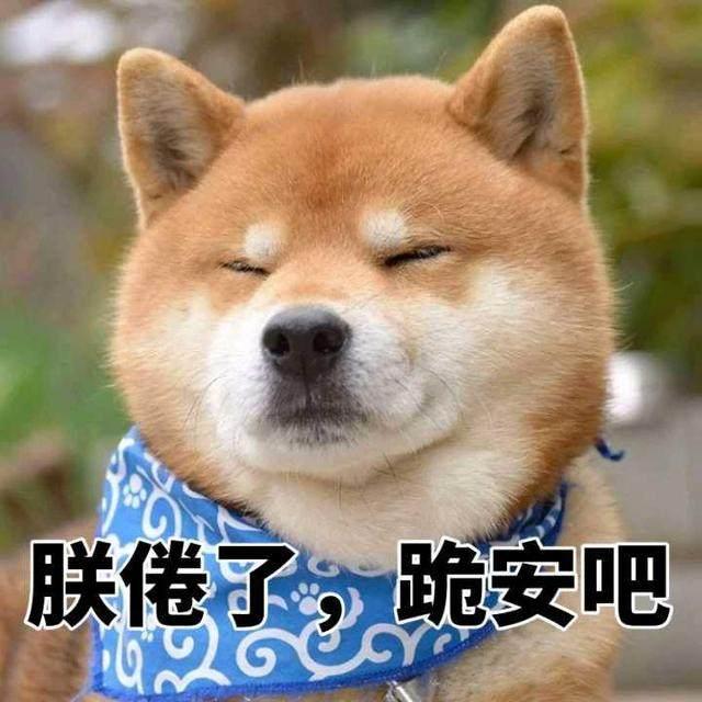 一大波柴犬表情来袭你的收藏夹准备好了qq张富贵表情包图片