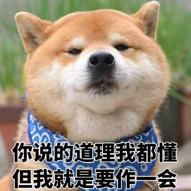 一大波柴犬美女来袭你的收藏夹v美女好了动态下载专区表情包表情图片