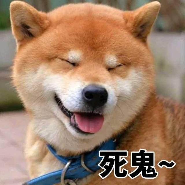 一大波柴犬表情来袭你的收藏夹准备好了表情包啵的动态啵啵图片