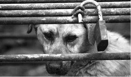 吃面被狗吓心脏病住院8天 食客索赔找不到狗主人起诉面店