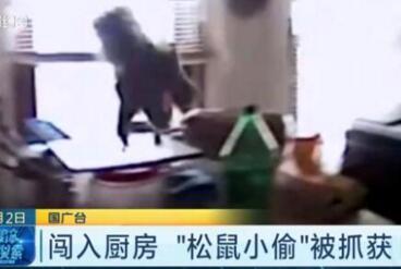空中飞跃!警察缉拿松鼠小偷 不速之客偷吃被捉上演高难度大逃亡