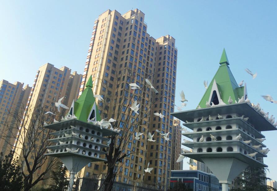 济南西部新城添新景 200余只广场白鸽吸引市民观赏