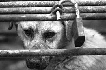 吃面被狗吓到心脏病复发住院 找不到狗主人饭店被判赔偿一千多