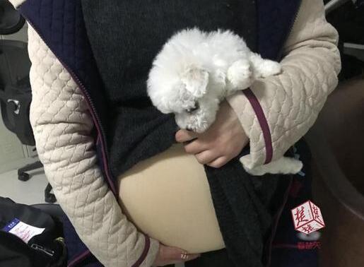 闹剧!女学生扮孕妇藏狗坐飞机 硅胶假肚皮
