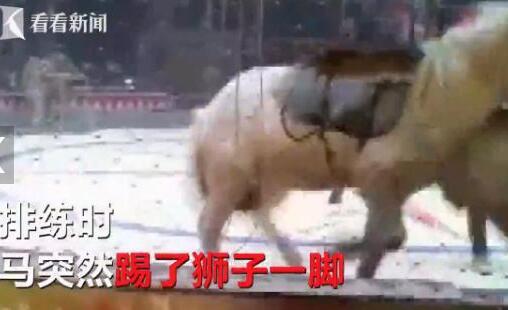 失控!马戏团排练出意外全场揪心 狮子骑马时与老虎一口咬住马太残忍!