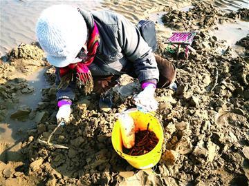 青岛这一海域现大量花蛤、竹蛏 市民收获颇丰