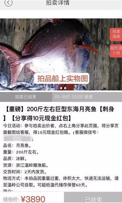 捡到宝!渔民捕获怪物鱼 200斤温血精体色锈红通身白色斑点(图)