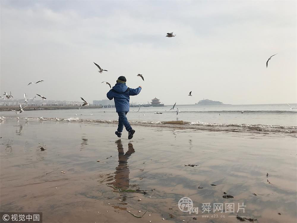 青岛:上万只海鸥振翅飞舞 游人海边戏鸥