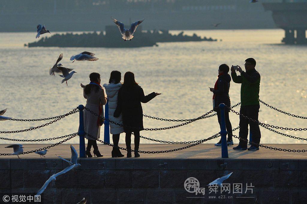 青岛:红嘴鸥冬日舞栈桥 市民近距离观赏喂食