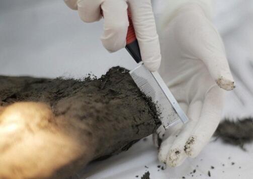 """克隆专家发现12400年前""""秃麻""""狗干尸 已灭绝的动物或将""""复活"""""""