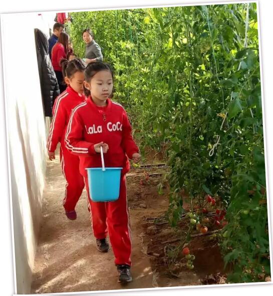 《沃小番番茄文化》小讲堂开课啦!