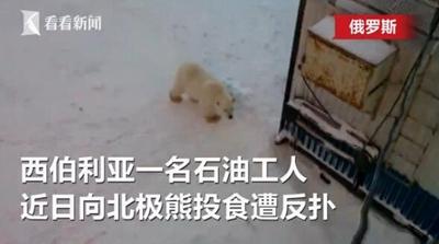 """喂北极熊险遭反扑 """"战斗民族""""落荒而逃"""