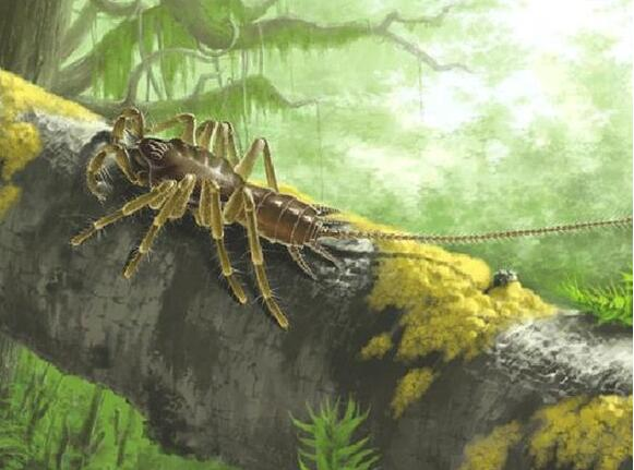 活久见!发现亿年前远古蜘蛛 形状奇特长有比身子还长的尾巴(组图)