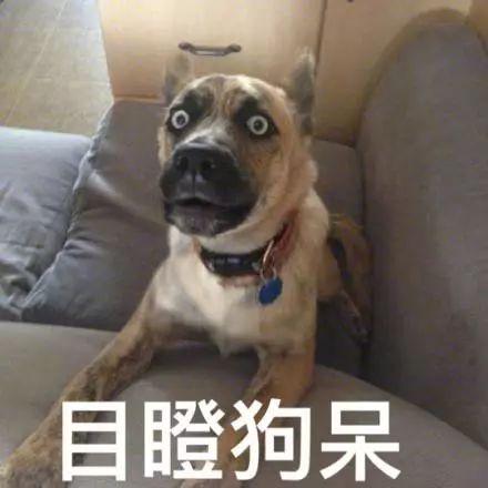 狗年已经到了?可能99%的人不知道:生肖从这天开始算……