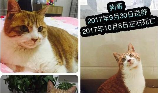 南京:男子收养9猫相继摔死 猫咪离奇失踪引起怀疑