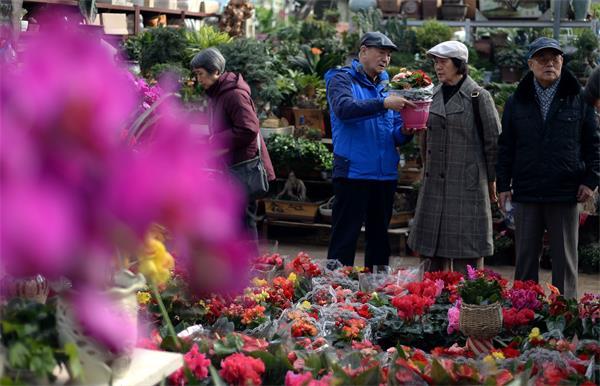 88必发官网:情人节遇上春节 盆栽花卉更受宠