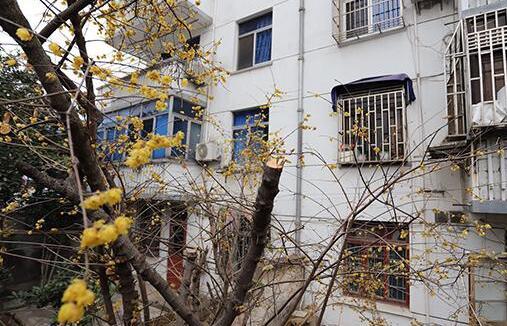 退休官员被举报闯入民宅砍伐邻居名贵树 警方已立案