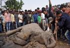暖心!印大象被火车撞倒受伤 兽医展开救援民众向其投喂香蕉