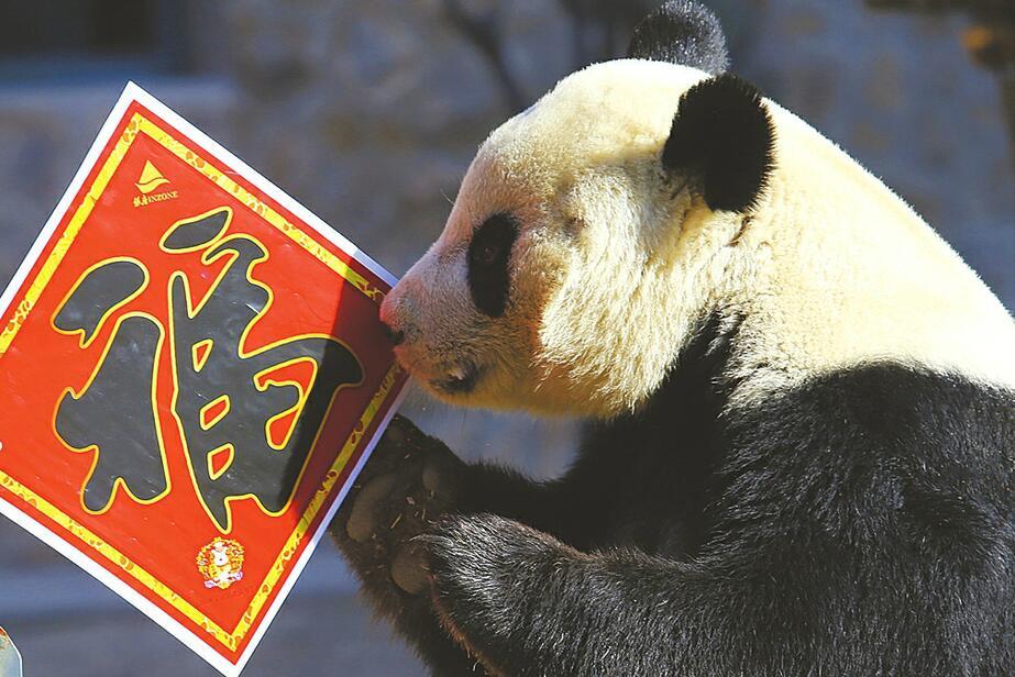 """动物园张灯结彩年味浓 """"国宝""""送福贺新春"""