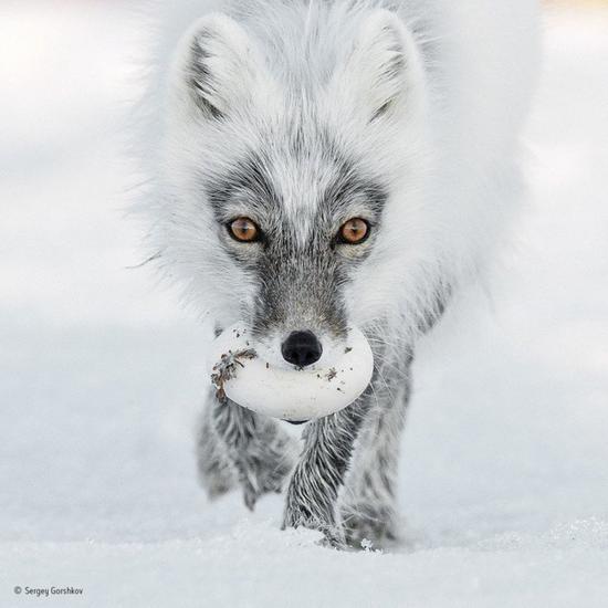 2017野生动物摄影师大赛之决赛作品欣赏