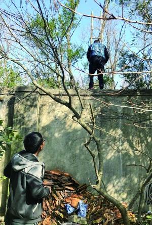 团伙带游客翻上海野生动物园 节假日一天送进七八十人
