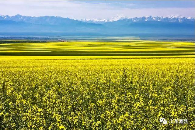 山东计划开行8趟赴新疆旅游专列,美景美食不可错过!