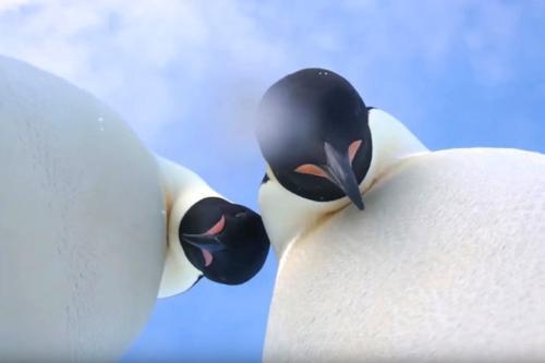 """企鹅撞翻摄影机""""自拍"""" 网友:这个不能吃"""