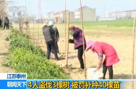 4人盗伐3棵树悲剧了 罚款后又责令4人各补栽10棵意杨树