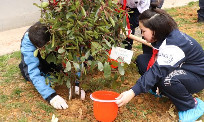 刚刚过去的植树节  苏宁在全国种下3000余棵树