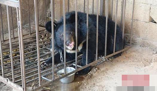 啼笑皆非!误把熊当狗养3年心真大 精心喂养的