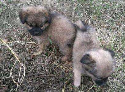 两只狗宝宝野外守护着狗妈妈的尸体 女孩两次落泪要给狗狗一个家