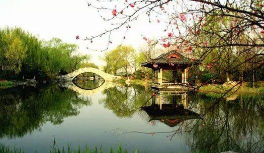 青岛:中山公园梅花盛开 引市民扎堆拍照